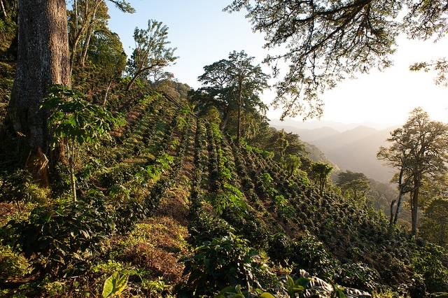 Mexiko Chiapas Altura