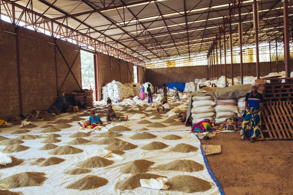 Rwanda Rushashi Experimental