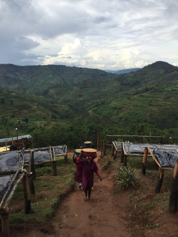 Rwanda Coko - Buhuri village